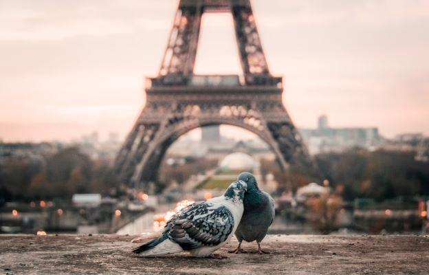 Влюбиться во французский!
